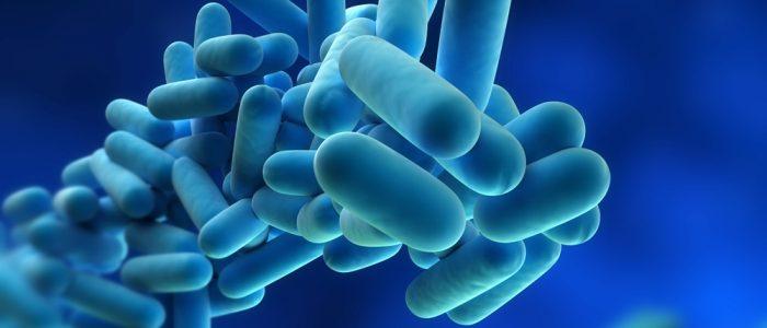 legionella-bacteria-large